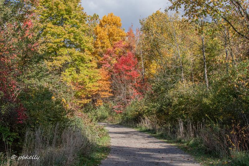 path 101320.jpg