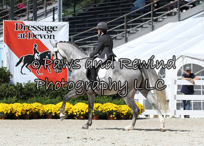 Wednesday Gold Ring Class 141: Materiale Class-- 4 & 5 Year Old Colts & Stallions