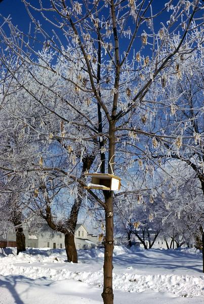 ARS036.  Arthur - Birdfeeder - Snowy tree. - Mar 1966.jpg