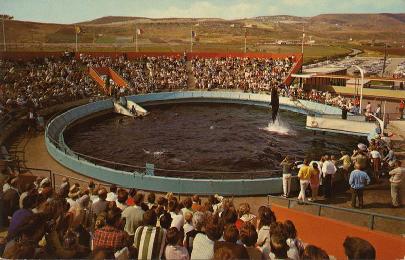 Marineland Dolphin Show