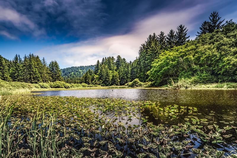 Lagoon Creek 2583-1.jpg