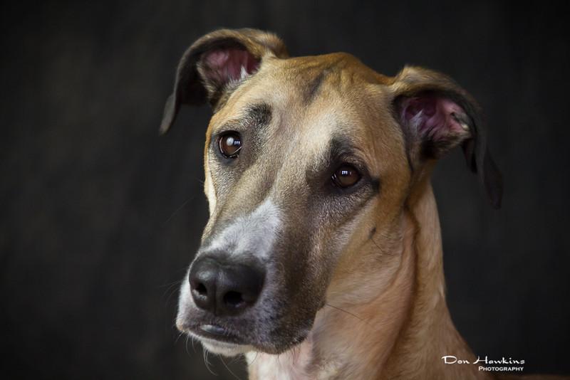 emily-mason-pets-2014-0406.jpg