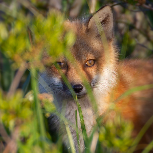 sm 5 fox_M4D1566.jpg
