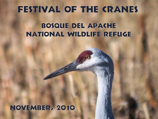 Festival of the Cranes, November 2010