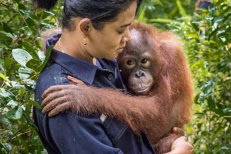 Borneo-2250-2.jpg