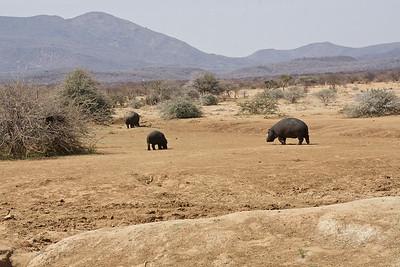 Central Namibia - Erindi