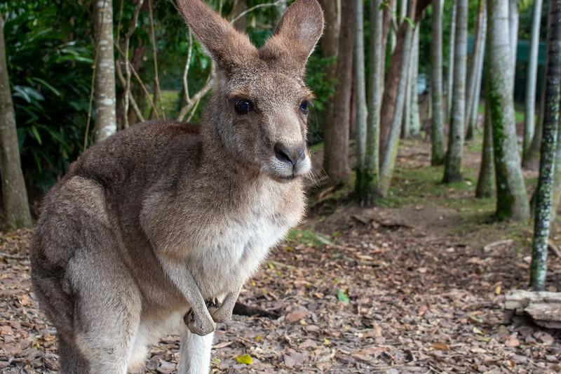 Australia_192.jpg