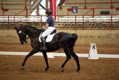 Horse 458