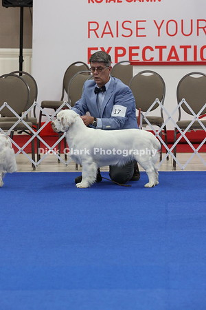 Puppy Dogs 9-12 Months