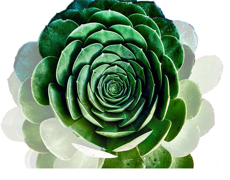 Cactus fun.jpg