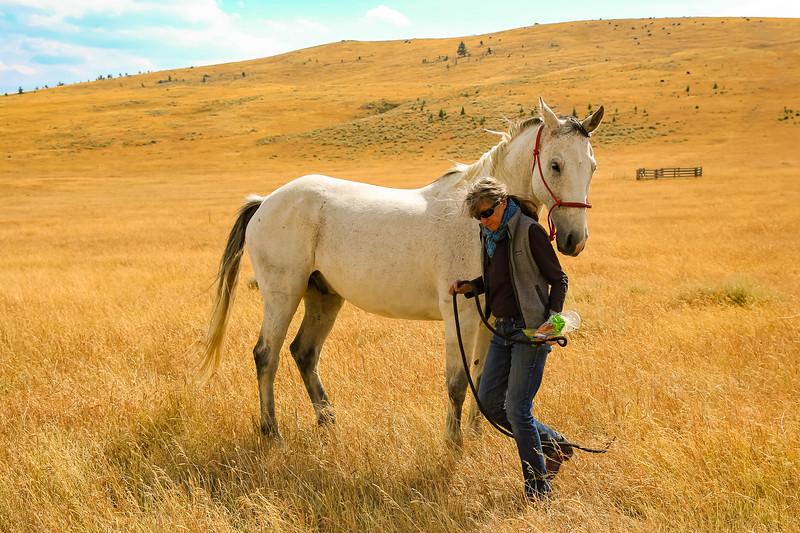 Horses 44.jpg