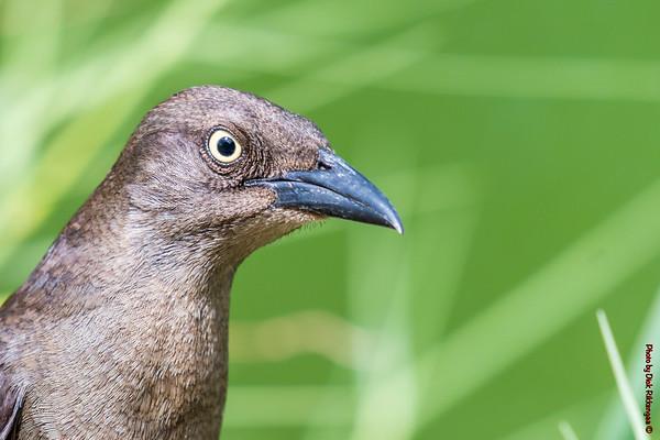 Various Land Birds