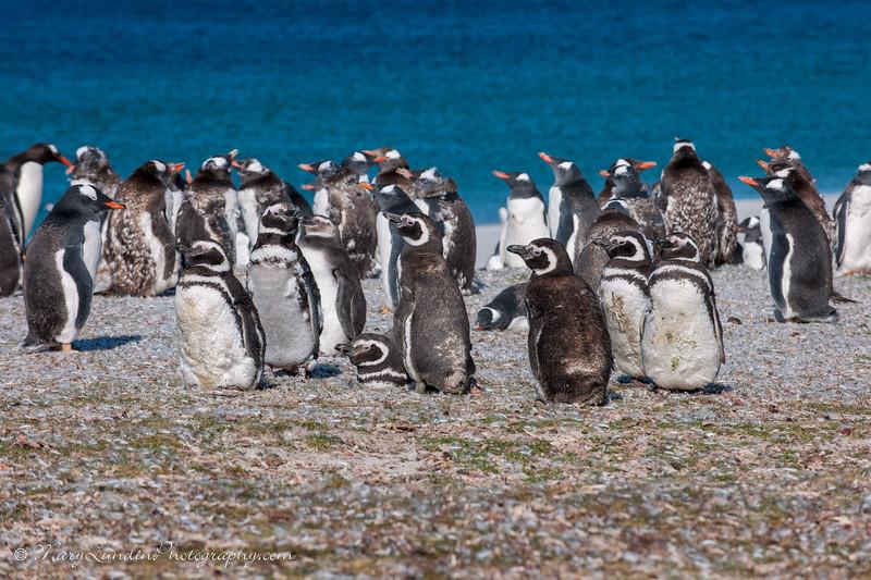 Antarctic-191