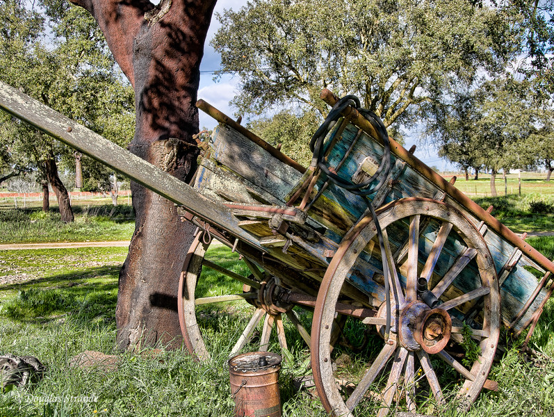 Wed 3/16 en route to Lisbon: An old wagon next to a cork oak tree