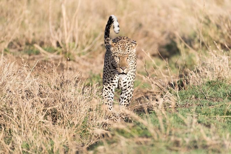 Africa - 101616 - 5039.jpg