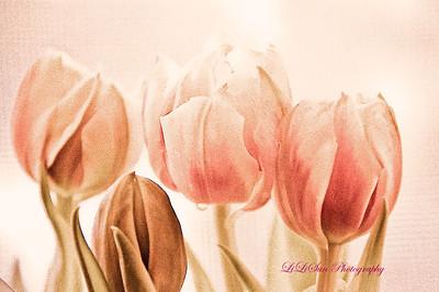 2012 Flowers