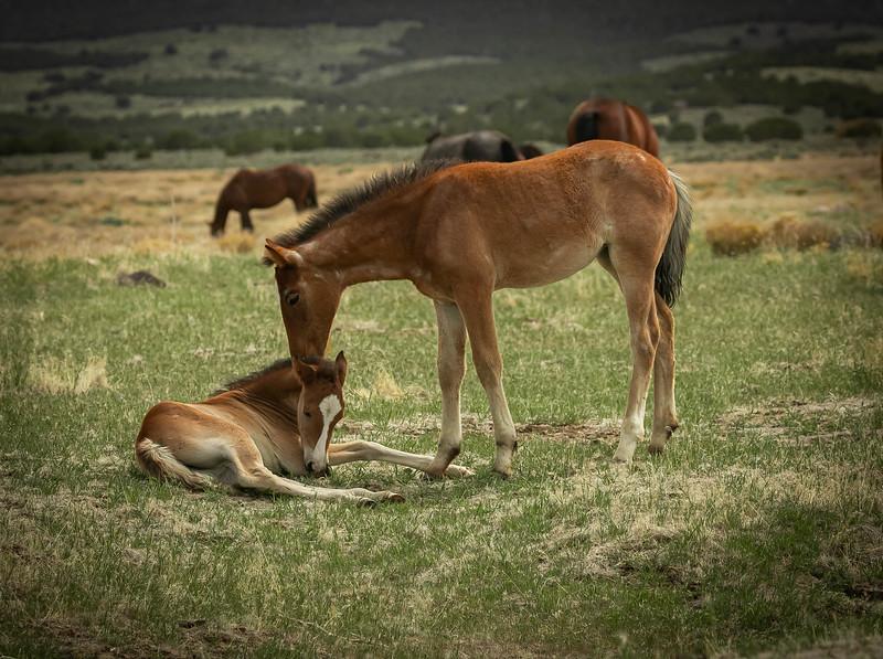 2 colts.jpg