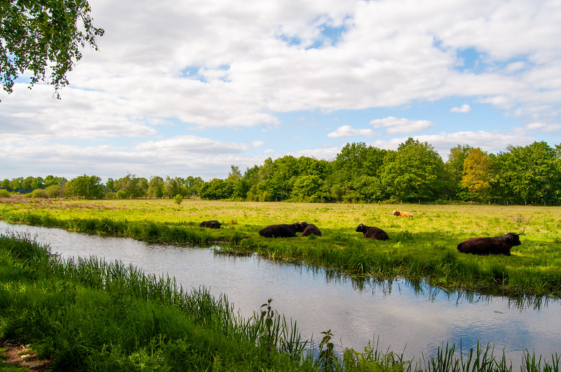 GrensPark Kempen~Broek, omgeving Stramprooierbroek & St.-Maartensheide 25.jpg