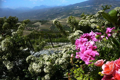 Greece: Wineries