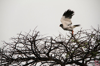 bird in Etosha National Park, Namibia