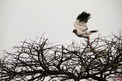 bird in Etosha National Park, Namibia