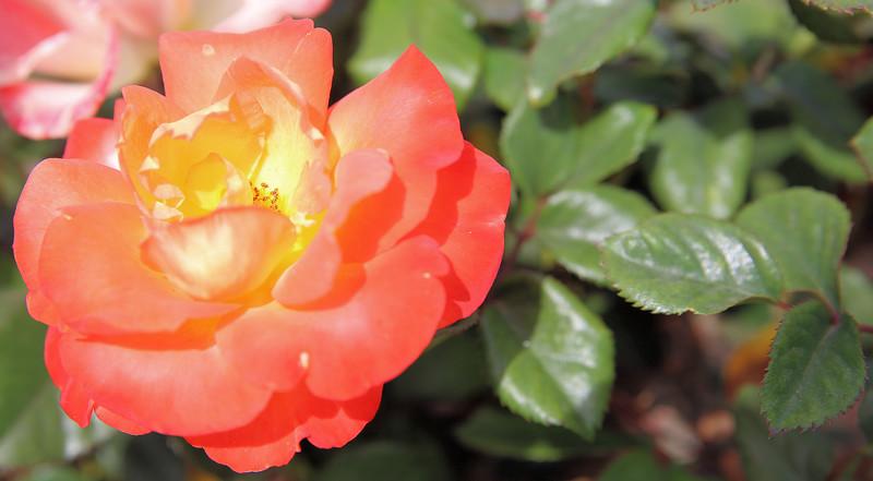 Orange plain 6.14.jpg