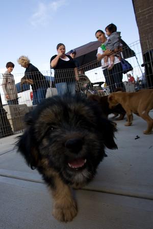 Petsmart Puppies for adoption