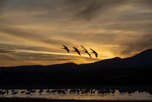 Bosque Del Apache, NM