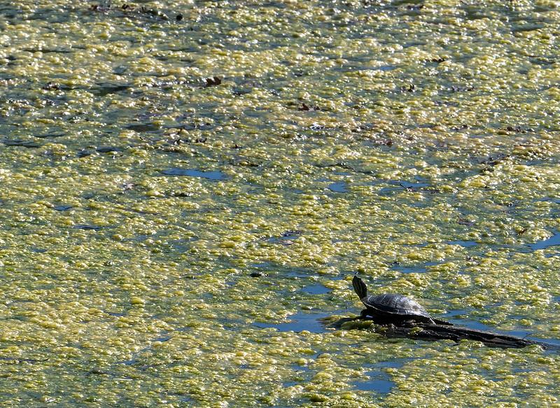 stranded turtle.jpg