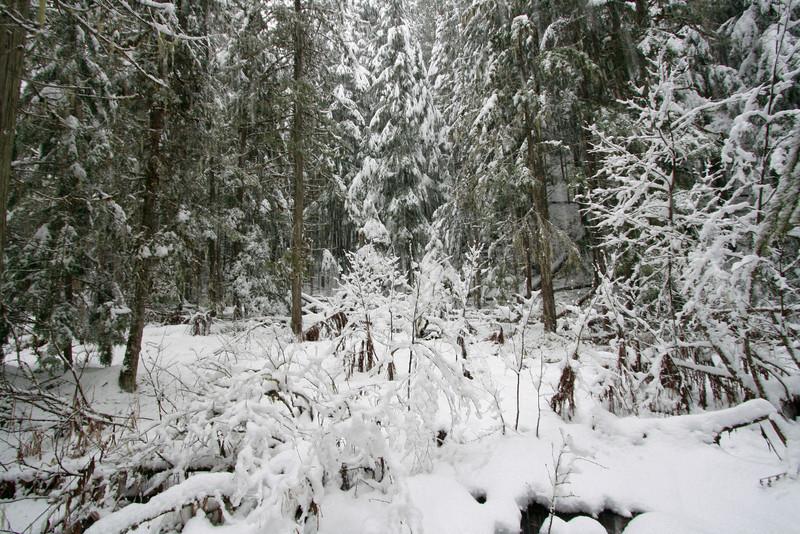 winter 2013-0308.jpg