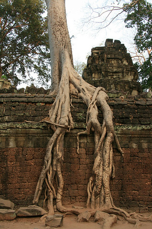 Siem Reap and Ankor