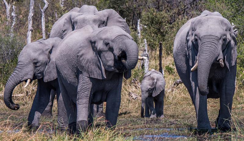 Botswana_June_2017 (3233 of 6179).jpg