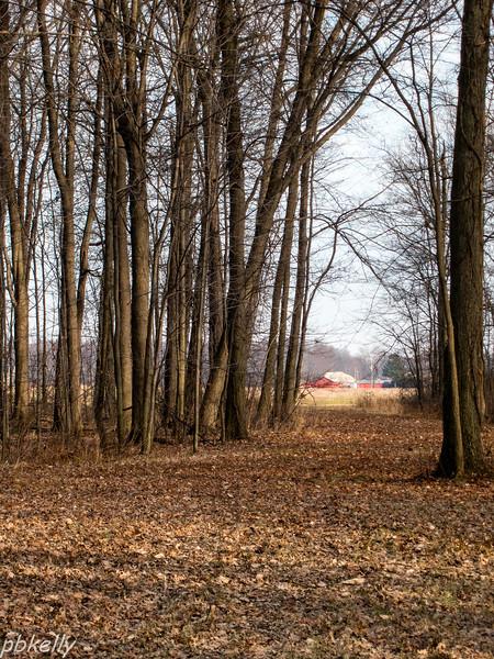 lane and barn 122713.jpg