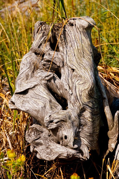 Interesting driftwood.