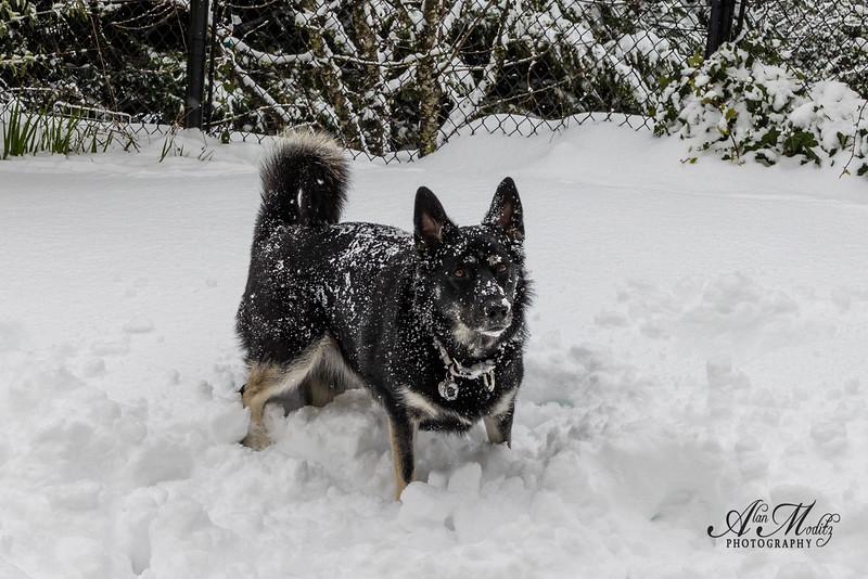 Snowmaggedon '21