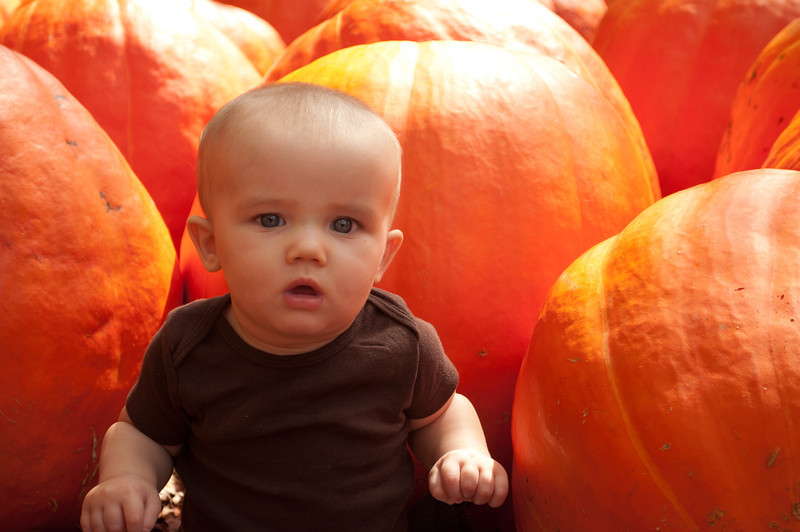 7 Months at Burt's Pumpkin Patch