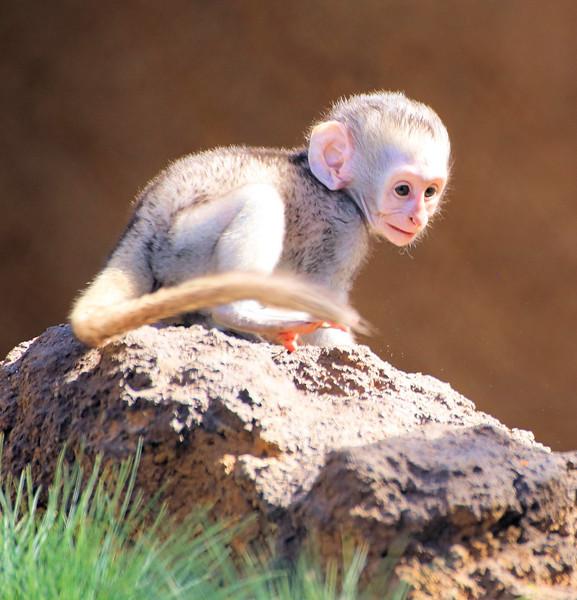 IMG_1546 Tiny monkey 2017.jpg
