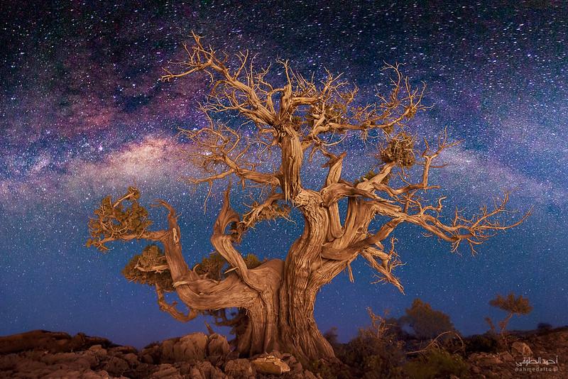 Tree - final copy.jpg