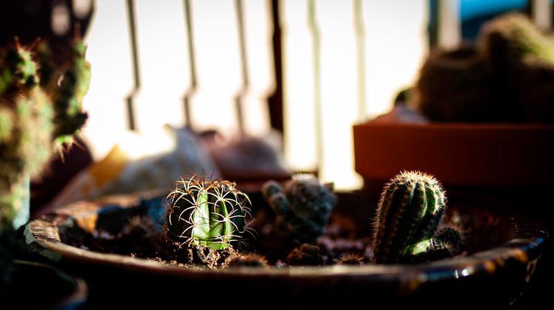 cactus 020120-1292.jpg