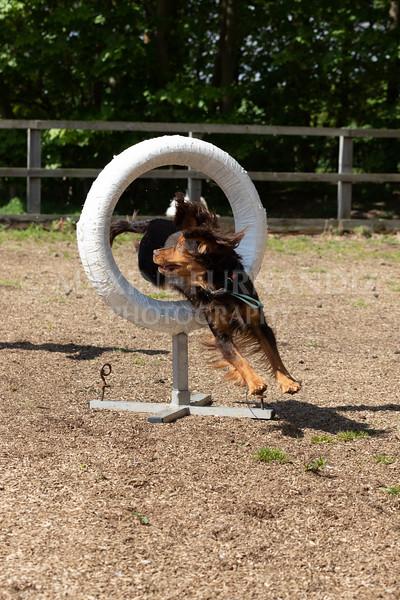 Dogs-8054.jpg
