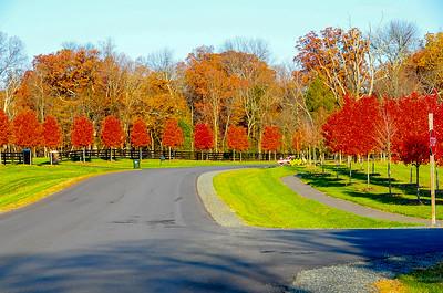 Fall Foliage -- 2011
