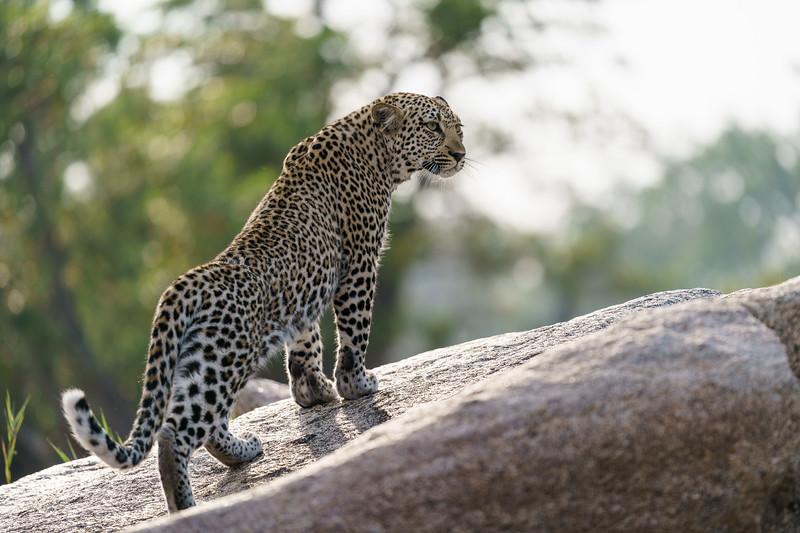 LeopardHills-20171024-1862.jpg