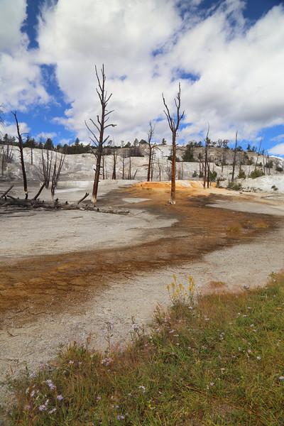Yellowstone 116.JPG