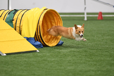 Mt. Nittany AKC Agility Trial August 8-9