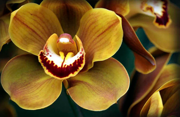 Orchids 6.jpg
