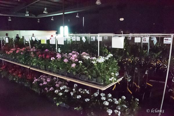 HCMGP2 Plant Sale 2/18/2017