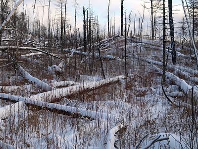 Kekekabic Trail Clearing Dec 6 2008