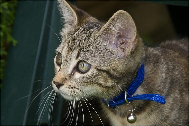 Kitten (1)