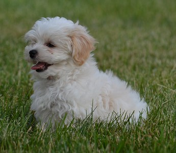 Sophie 2011 (born 3/22/11)