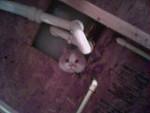 46- Wiggles Supervises Home Remodeling (Foyut)